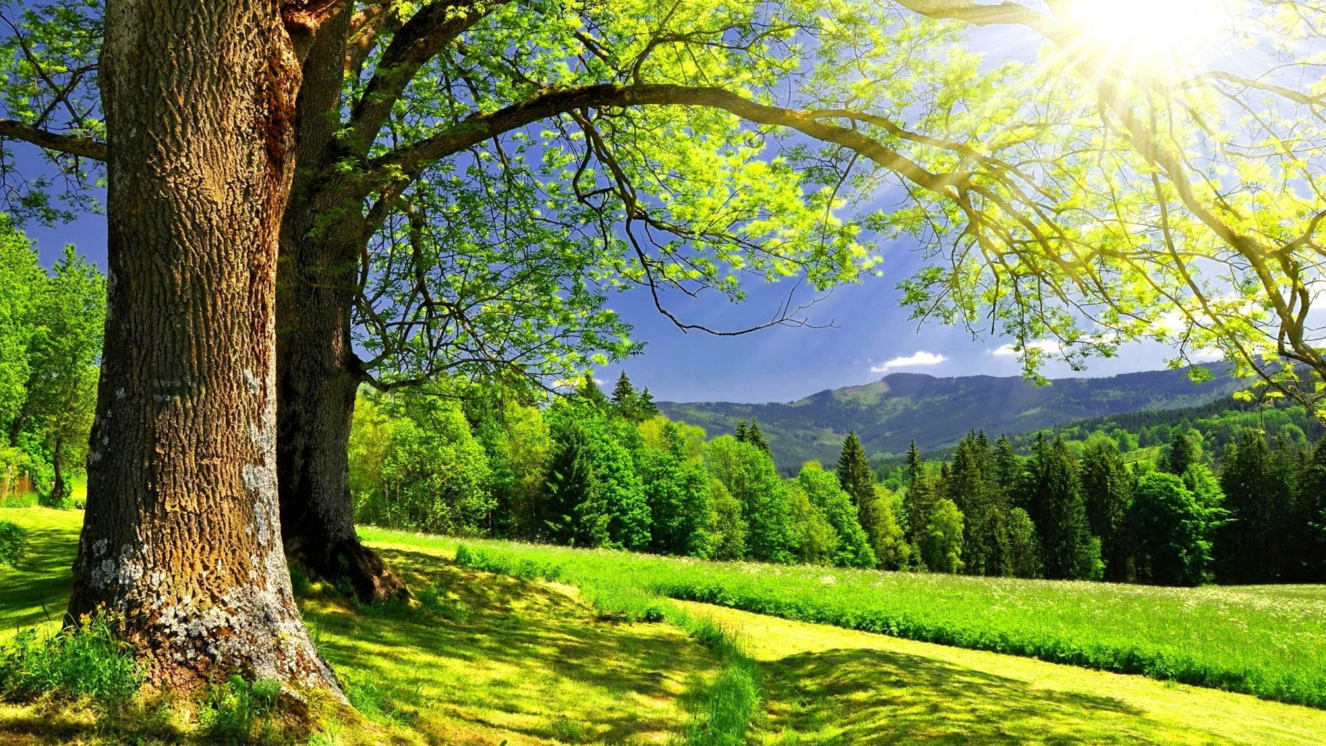 Golden Sun Rays Hills Grass Sunlight Tree Forest Clear Meadow Cllouds Dazzling Mountain Sunny Sunshine Sky Nice Summer Nature Bright Greenery Beautiful Lovely Green High Resolution